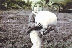 Не просто гриб-дощовик, а справжній гігант.