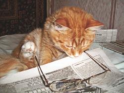 «Що там такого цікавого господар вичитав?»