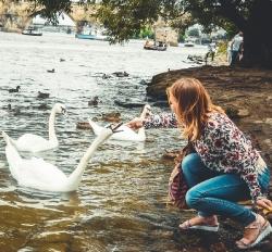 Красені-лебеді
