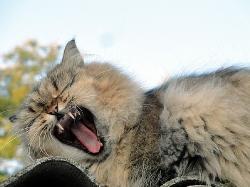 «Спати хоче-е-е-ться!»