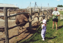 «А страуси їдять травичку?».