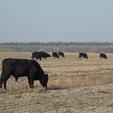 «Не хочемо, щоб худоба вільно гуляла селом!..»