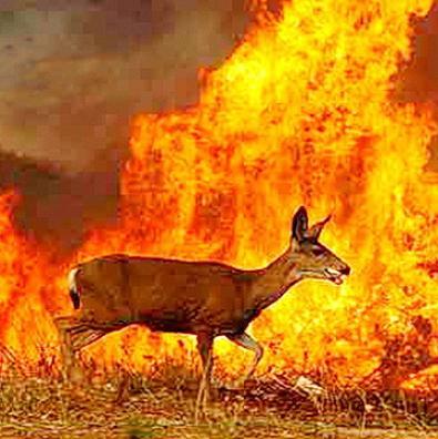 Птахи й зайці — згоріли, вовки — втекли |Як вплинули пожежі на півночі області на стан тамтешньої фауни?