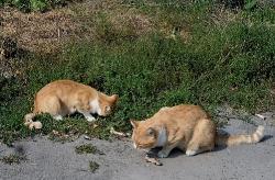 Котику-братику, поділися обідом!