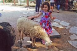 «Пасися, овечко, поки тротуар не поремонтували»...